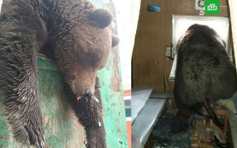 Застрявшего вокне вагончика медведя выдергивали КамАЗом