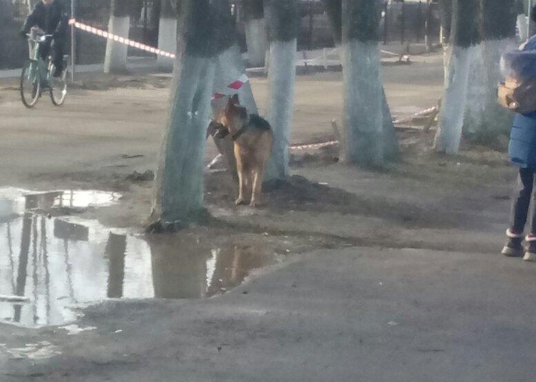 В Фокинском районе овчарка запугала детей