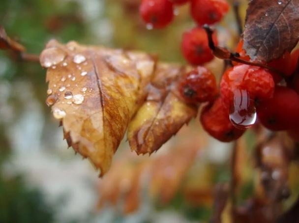 Дождь повсеместно: синоптики озвучили прогноз на завтра