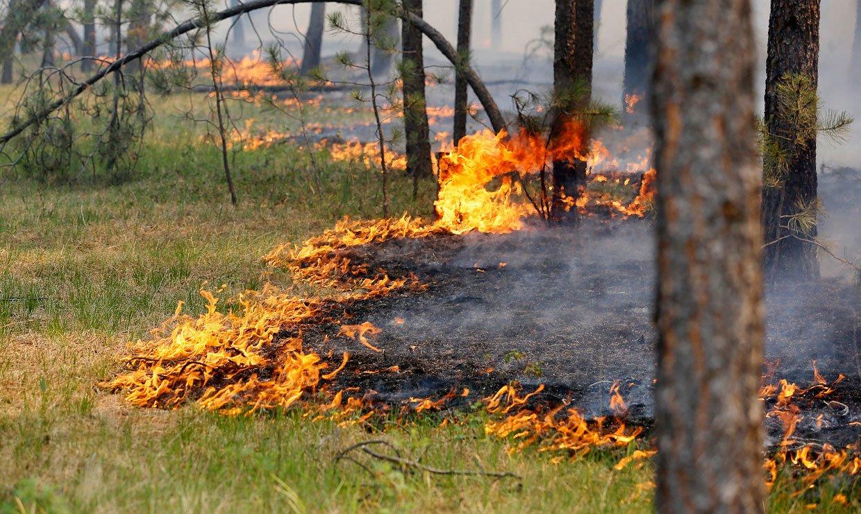 Лесной пожар под Брянском тушили 9 человек