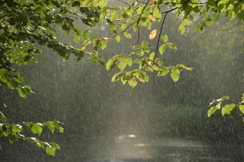 В среду в Брянске продолжит идти дождь