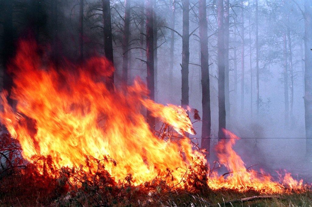 Вблизи Радицы-Крыловки в пятницу горел лес
