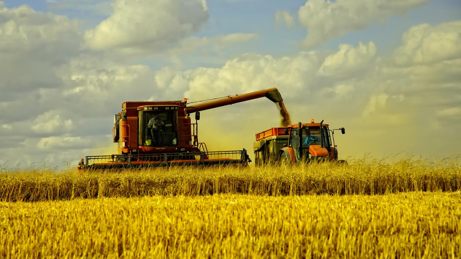 В Брянской области убрали более половины зерновых