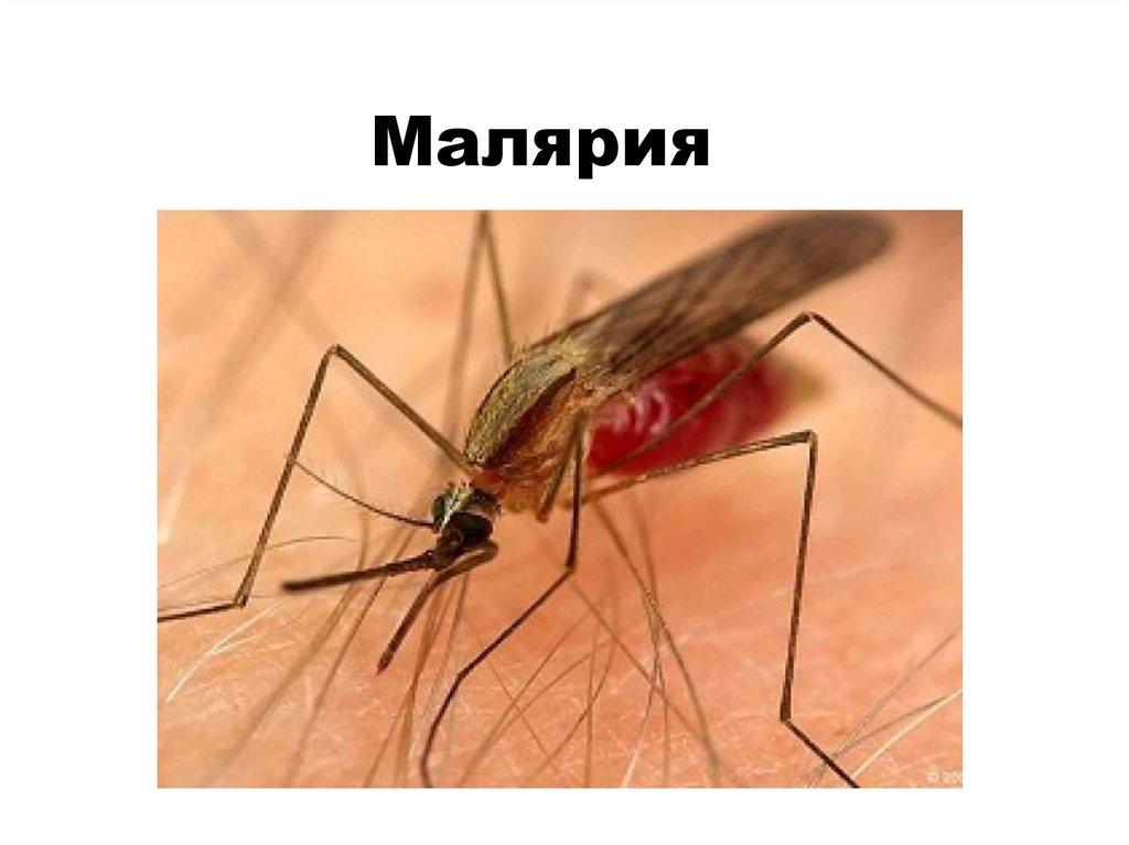 Тропическая малярия может прийти в Брянск из соседнего Орла