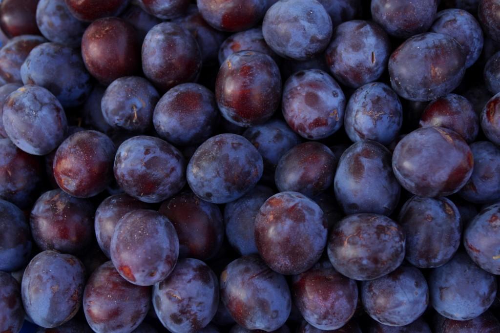 Из Молдовы в Брянск пыталась проникнуть восточная плодожорка