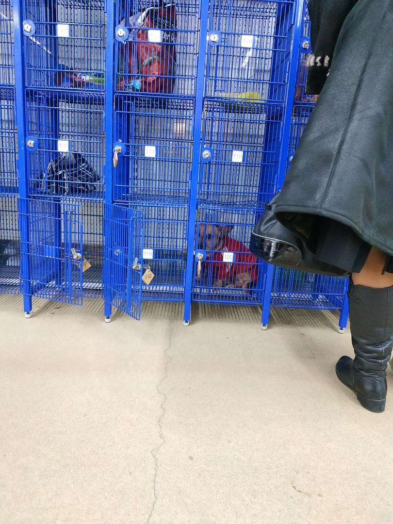 В камере хранения брянского магазина оставили собаку