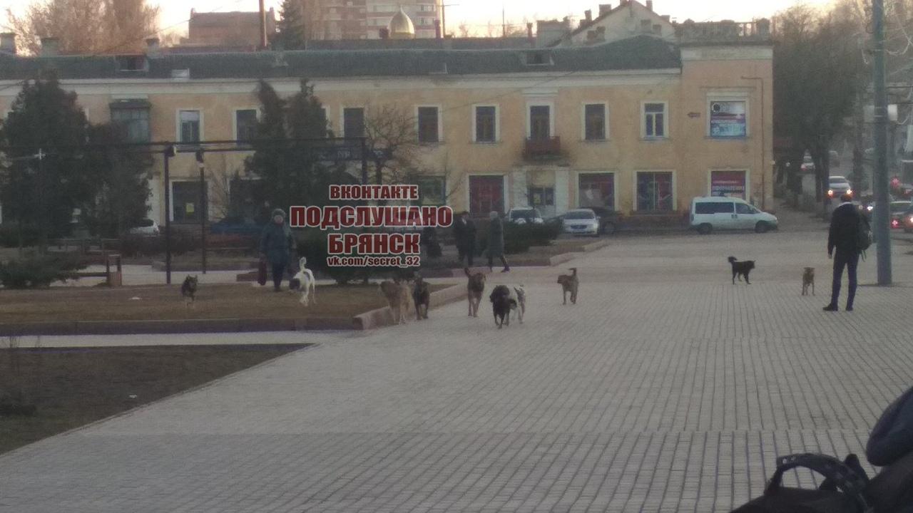 В Брянске на Набережной собаки бросаются на прохожих