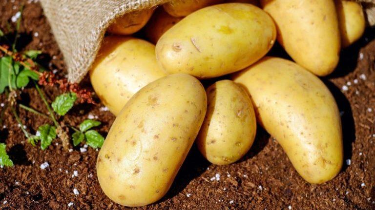 В Брянской области измельчили и захоронили полтонны овощей и фруктов