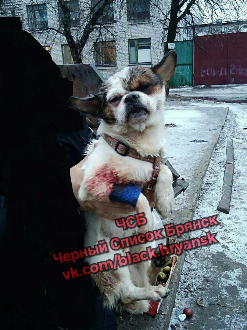 В Брянске собаку жутко избили и выкинули в бак умирать