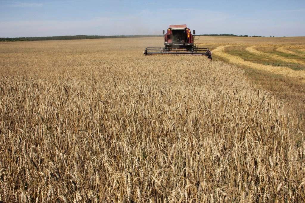 В Брянской области убрали десятки тысяч гектаров зерна