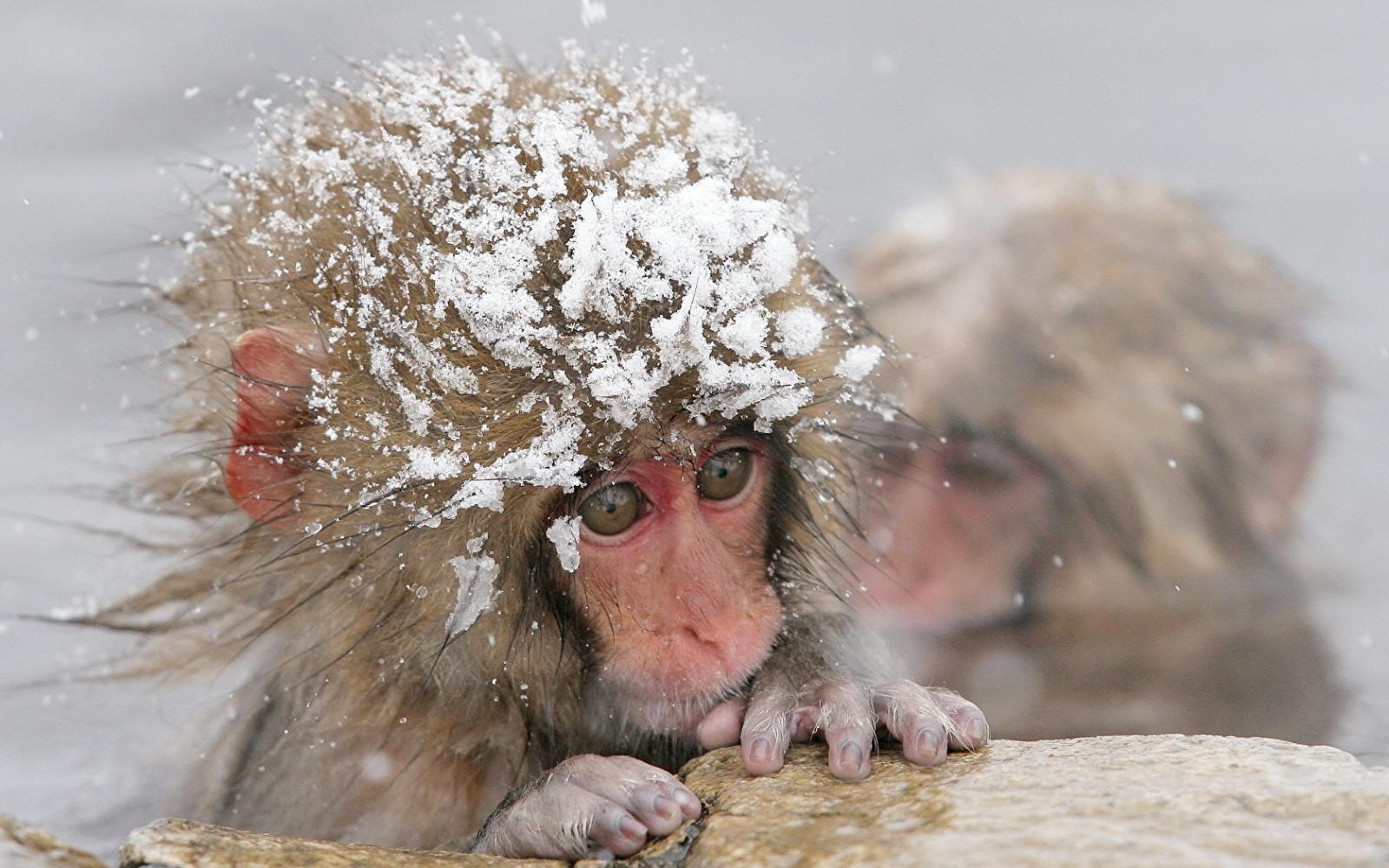 ВБрянск идет холод