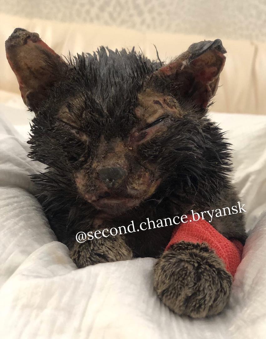 В Брянске умер кот, брошенный детьми в трансформаторную будку