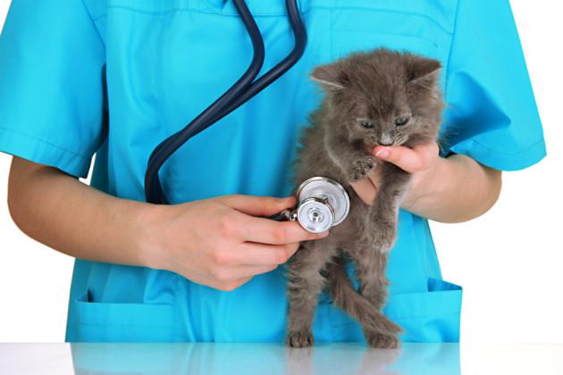 Жителей Брянска попросили отказаться от ряда лекарств для животных