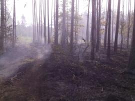 В Брянском районе вновь тушили лесной пожар